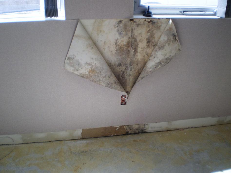 hidden-mold-1