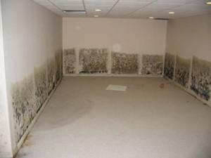 wet moldy walls
